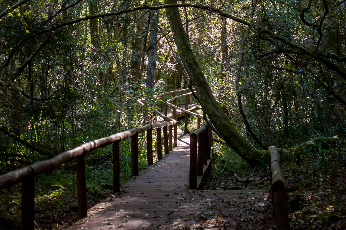 kologha forest boardwalk stutterheim